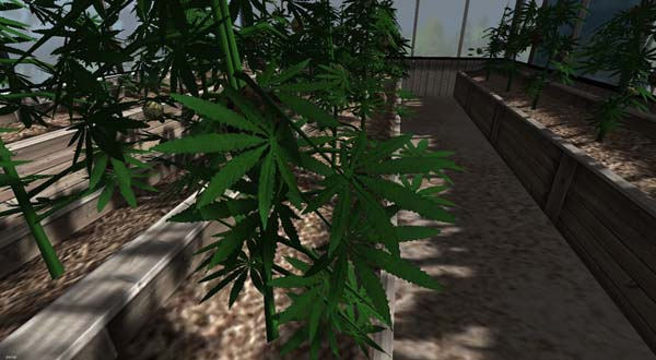 Hemp booth to grow industrial hemp