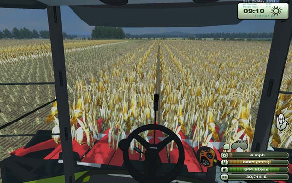 Corn in rows