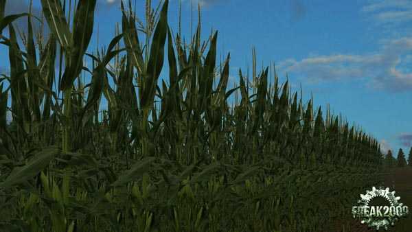 Real corn HD Texture