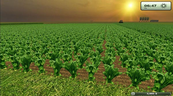 Sugarbeet texture HD
